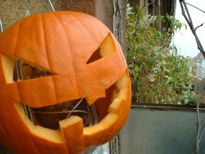 pumpkin pontent